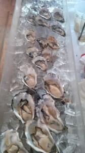 los angeles oysters